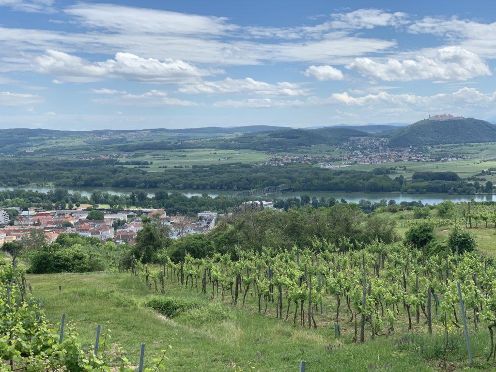Krems szőlőskertek